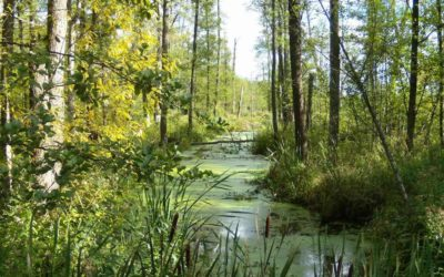 Białowieża: Saving Europe's last primary forest