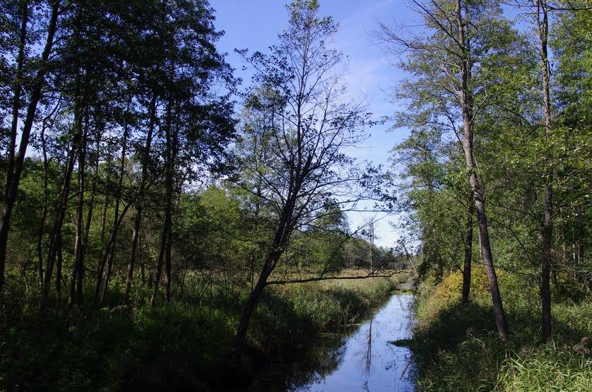 Ateliers de la Biodiversité sur la forêt