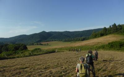 Quel avenir pour la forêt wallonne ? Au-delà des incertitudes, une opportunité pour plus de nature en forêt !