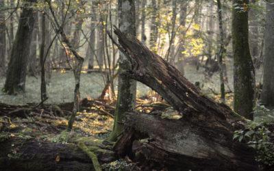 Journées d'étude GHEF: Table ronde autour du film « Bialowieza, le chant du cygne »